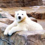 旭山動物園 割引