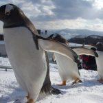 長崎ペンギン水族館割引
